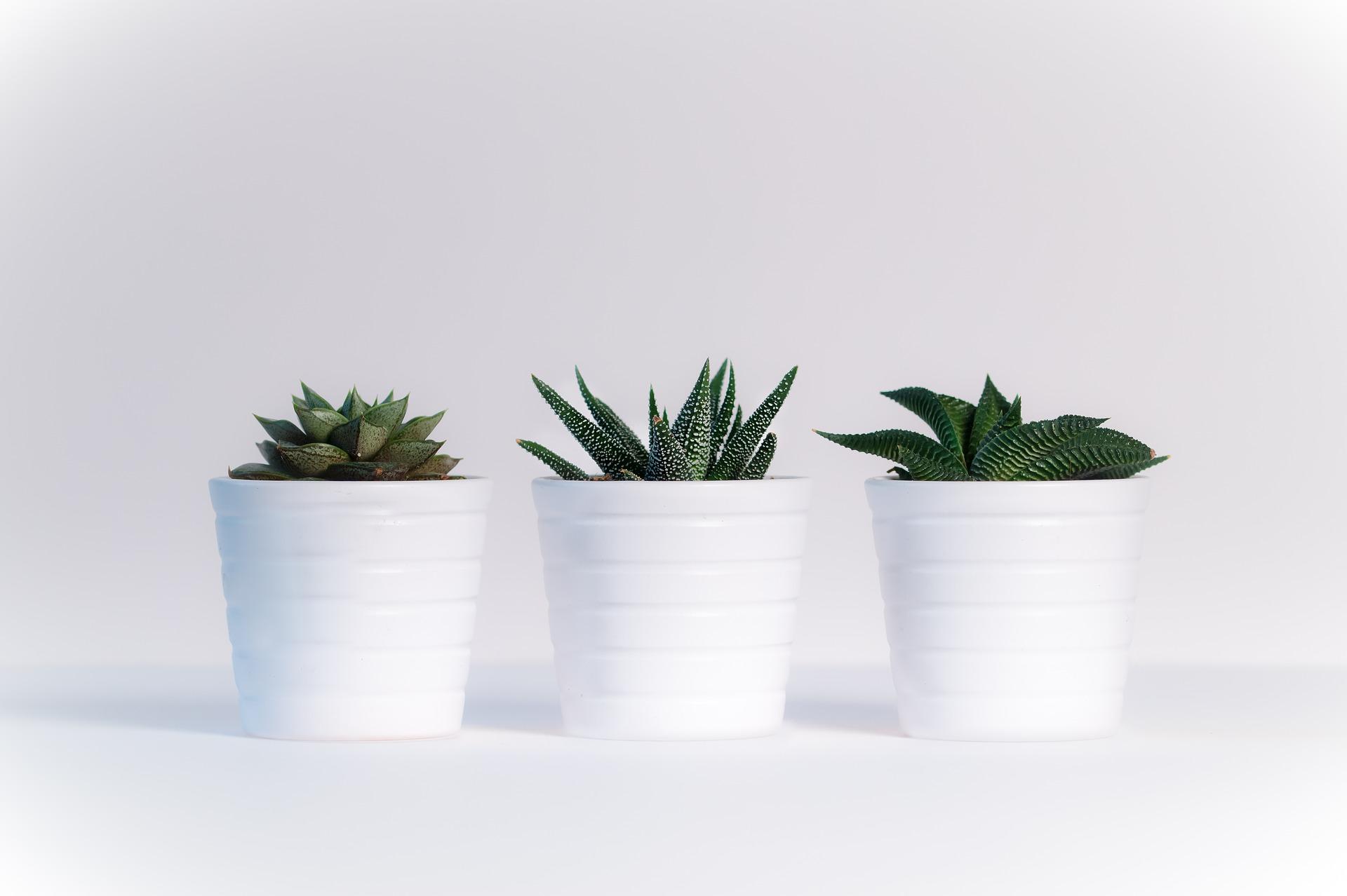 Białe Kwiaty Doniczkowe Jakie Można Znaleźć W Sprzedaży