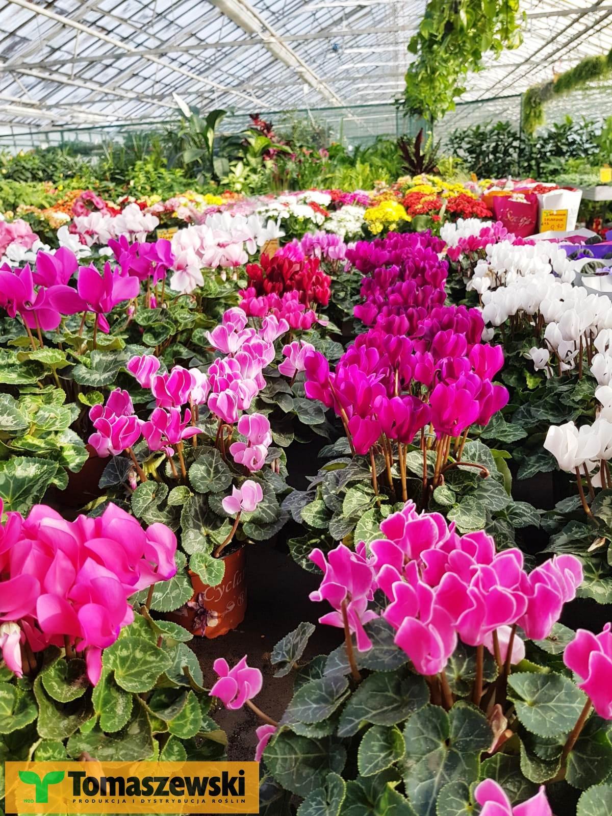 Jak Nawozic Kwiaty Doniczkowe Aby Obficie Kwtily I Bujnie Rosly